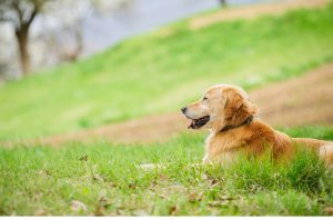 Secure dog walking fields to enjoy days out with your dog