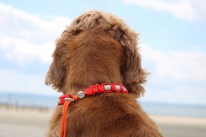 Dog wearing a tick prevention necklace