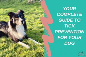Your complete guide to tick prevention for your dog